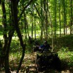 rando forêt fin de parcours
